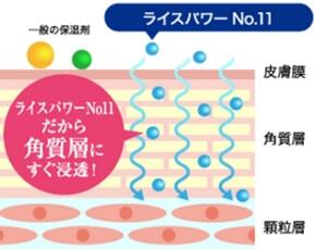 エマルジョンNo11・角質層